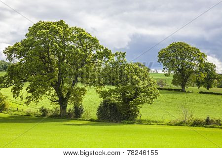 Trees over the Grass Field, Scotland