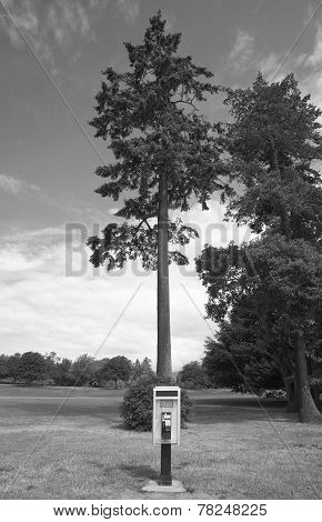 Public Phone And Tree In Stanley Park. Vancouver. Canada