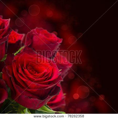 scarlet roses  on dark background