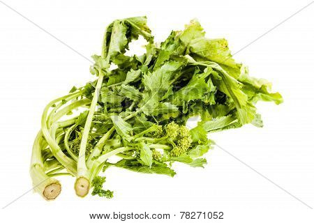 Italian Turnip Greens Over White
