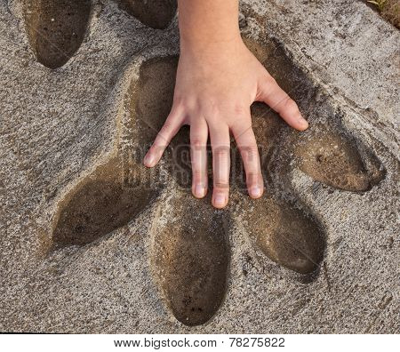 Hippo foot print with child's hand for comparison of size.