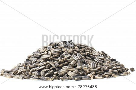 Close Up Dry Sunflowers Seed Isolated White Background Stacking Focus All Seed