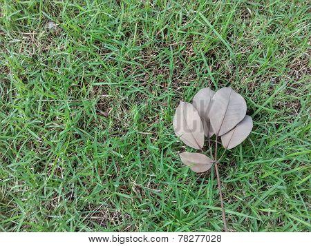 Dry Leave