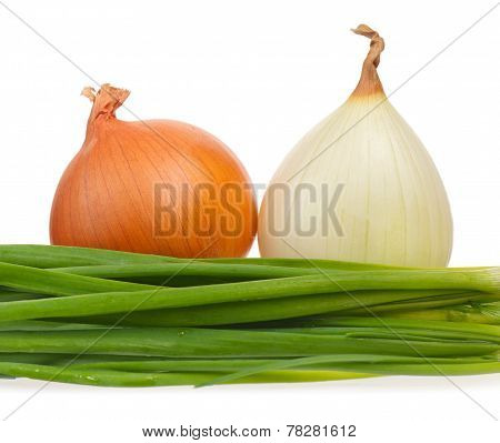 Young Onion