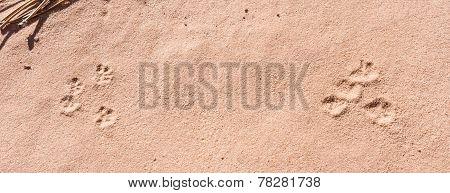 Frog Prints In Sand