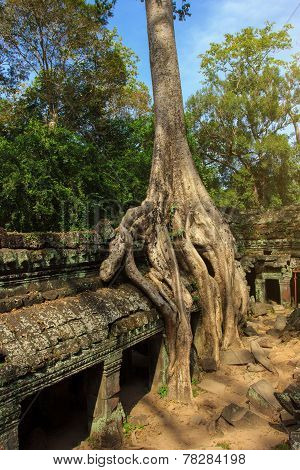 Ta Phrom temple ruins