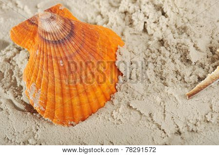 Cockleshell And Sand
