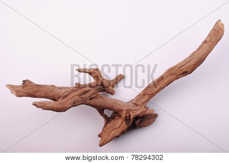Image Of An Old Snag Created Water Time In Nature