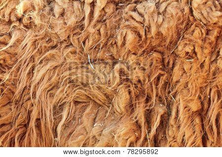 Lama Glama Textured Fur Detail