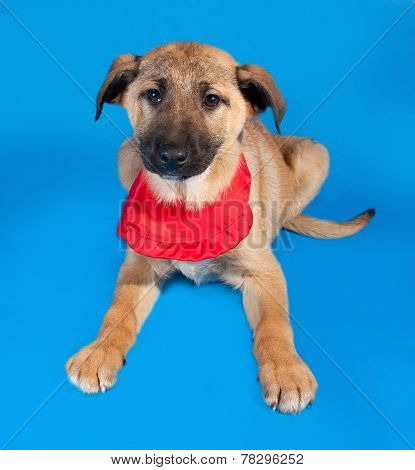 Thin Yellow Puppy In Red Bandanna Lying On Blue