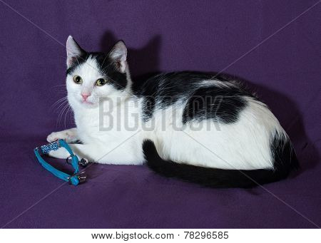 White With Black Spots Kitten Lying On Lilac With Blue Collar