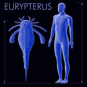 foto of scorpion  - An illustration of an average height human alongside the larger known Eurypterus  - JPG