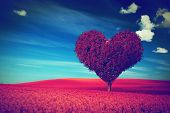 stock photo of lonely  - Heart shape tree with red leaves on red flower field - JPG
