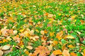 stock photo of october  - Autumn leaves on grass of the Park - JPG