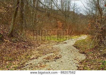 The Bed Of A Dried Up River Through The Forest