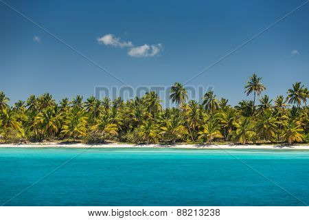 Palm Trees On The Tropical Beach
