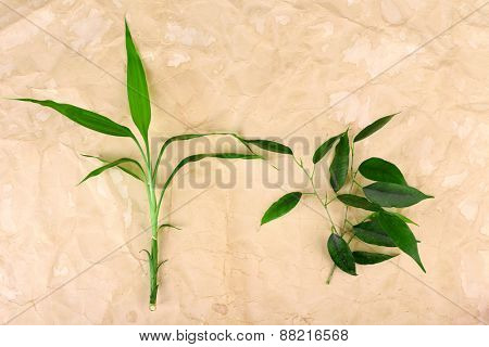 Bamboo and pipal twigs on paper background