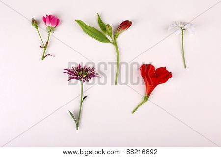 Different flowers isolated on white