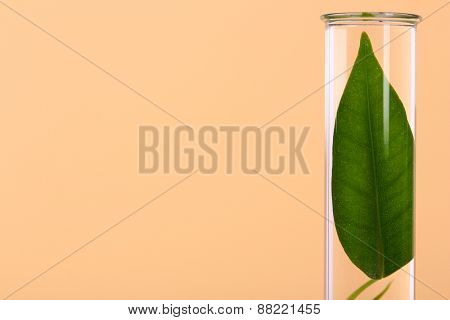 Green leaf in test tube on color background