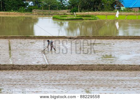 Rural Life And Farmland In Indonesia
