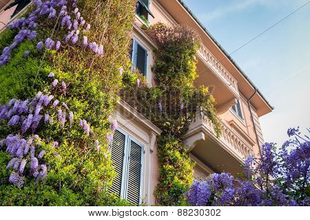 Traditional italian architecture of Pisa city with purple lilac bushes