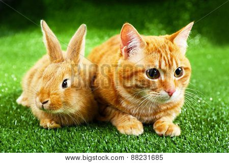 Red cat and rabbit on green grass background