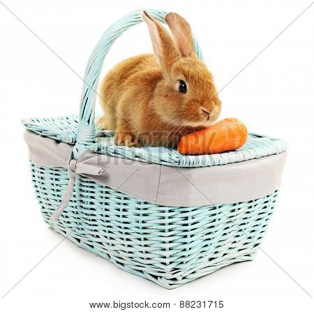 Cute brown rabbit on color wicker basket isolated on white
