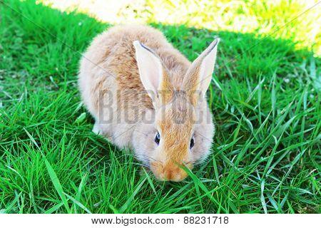 Little rabbit in grass close-up