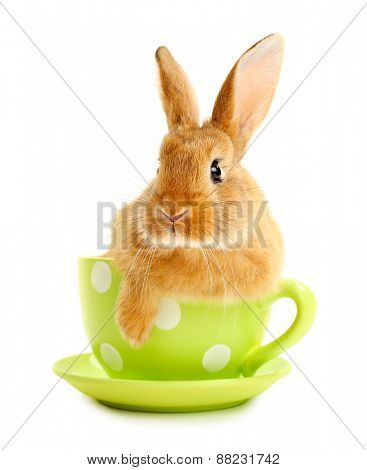 Cute brown rabbit in green dots cup isolated on white