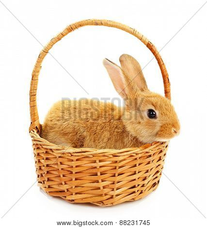 Cute brown rabbit in wicker basket isolated on white
