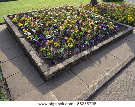 Colourful Flower Bed Pathway