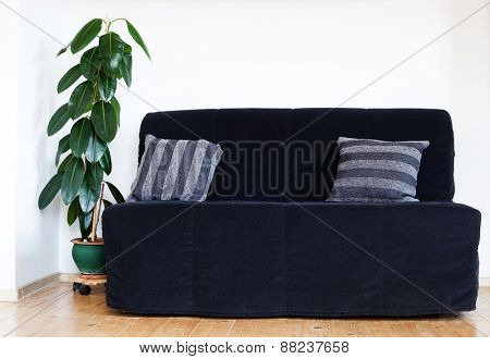 Green home plant ficus in flowerpot and black sofa. Interior background