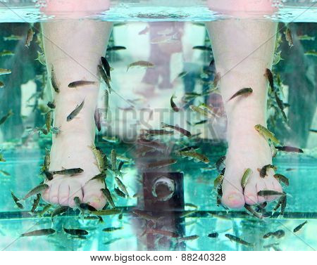Fish Spa. Rufa Garra fish spa pedicure massage treatment.