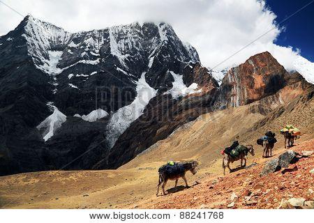 Caravan in Cordiliera Huayhuash, Peru, South America
