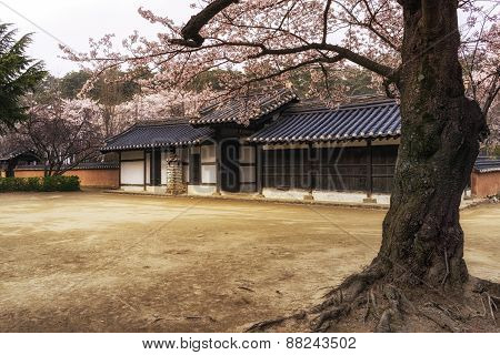 Traditional Korean House In Spring