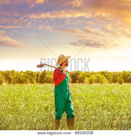 Farmer man with hoe looking at his orchard field with hat