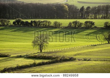 Evening Landscape Of Fields In Spring With Beautiful Side Lighting