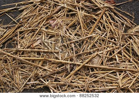 Hay Or Straw As Background Material