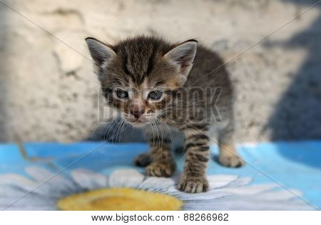 Little Homeless Kitten