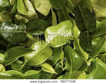 Kaffir Lime Leaf Food Background