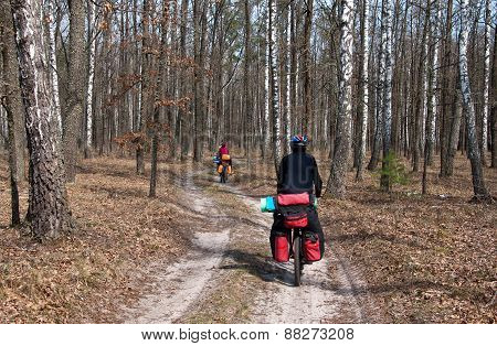 Cyclist practicing mountain bike on a forest trail.