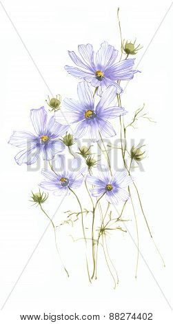 Blue Wild Field Flowers Watercolor On White Background