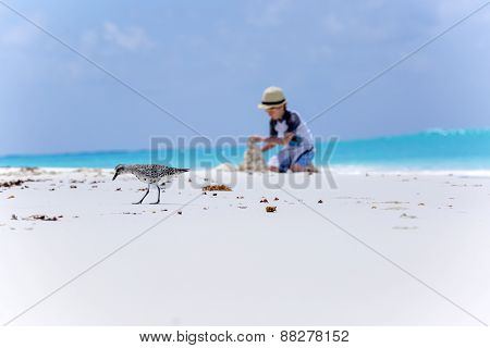 Bird on the beach and boy making sand castles