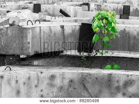 Green Tree Growing