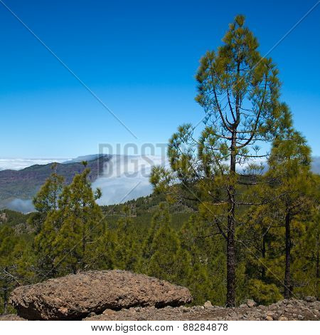 Gran Canaria, Los Cumbres - The Highest Areas Of The Island