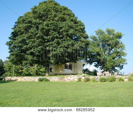 New England Farmhouse with Maple Tree
