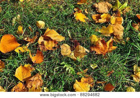 Autumn, Leaves Fall.