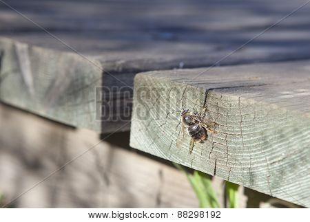 Bee Over Wood