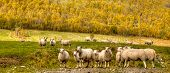 foto of tromso  - Green meadows with sheep in a beautiful area of Queenstown - JPG
