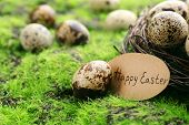 picture of grass bird  - Bird eggs in nest on green grass background - JPG